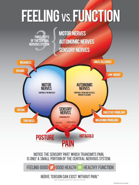 pain, sensation, motot nerves, function